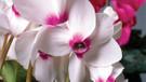 Bu havada hangi çiçekleri dikmeli?