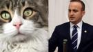 AKP'li vekil CHP'nin kedisiyle kavga etti!