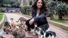 İstanbul'un Kedileri Amerika Gündeminde