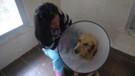 İki bacağına ateş edilen köpeği İngiliz çift sahiplendi