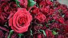 Ankara'da Sevgililer Günü'nde 300 bin çiçek satılacak