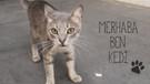 Merhaba ben Kedi