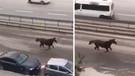 E-5'te dört nala koşan at görenleri hayrete düşürdü