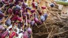 Kuran'da geçen mucize yiyecekler ve faydaları