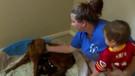 Uyutulmak üzere olan hamile köpeği sahiplendi sonrası inanılmaz