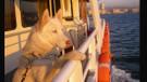 İstanbul Şehir Hatları'nda evcil hayvanlar için düzenleme