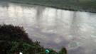 Son dakika: İstanbul'u besleyen nehre yakıt karıştı