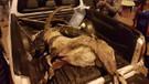 Nesli tükenmekte olan keçiyi korumaya çalışan köylüyü dövüp soydular