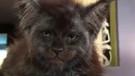 İlginç kedi sosyal medyayı ikiye böldü!