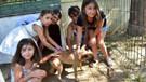Manisa'nın Turgutlu ilçesinde sokak köpeklerini okullar sahipleniyor