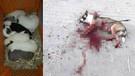 Okla vurulan Garip isimli köpeğin 9 yavrusu öksüz kaldı