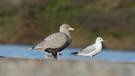 Küresel ısınma kuşları acımasız katillere dönüştürüyor