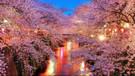 Japonya'da yeniden doğuş: Sakura zamanı hakkında bilmeniz gerekenler