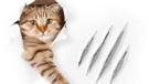 Kedi tırmalaması erkeklerde ereksiyonu engelliyor