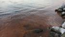 Silivri'de deniz turuncu renge büründü
