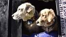Veterinerlerden evcil hayvan besleyenler kayıt altına alınsın talebi