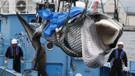 Japonya balina katliamına yeniden başladı