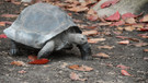 Hayvan kurtarma grubundan kaplumbağalar için yardım çağrısı: Eski sütyenlerinizi bize gönderin