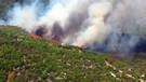 Bodrum'da orman yangını kabusu yine başladı