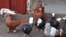 Beslediğiz kuş türü katiliniz olabilir