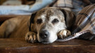 Esrarengiz hastalık onlarca köpeğin ölümüne neden oldu