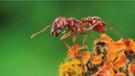 En çok hangi böceğin ısırığı can yakar?