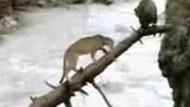Yavru ayının hayatta kalma mücadelesi!!! Buna inanamayacaksınız! VİDEO