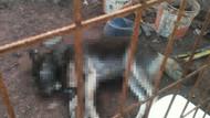 Yakalayın bu hayvan katilini! 6 köpek daha öldürüldü!