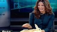 CNBC-E'de şaşırtan program! Ekonomiyi tavşanla anlattı!