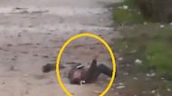 Al Jazeera muhabirinin vurulma anı! İnanılmaz görüntüler...