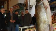 Hey maşallah! Elazığ'da yakalanan balık görenleri şok etti!