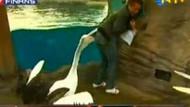 Sunucunun bittiği an! Canlı yayında pelikan saldırdı!