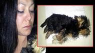 Yavru köpek THY'nin uçağında donarak öldü!