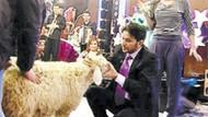 Büyük düşünür Nihat Doğan, koyunu gözünden tanıdı!