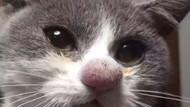 İlginç kedi manzaraları