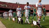 Sao Paulo sahaya köpeklerle çıktı