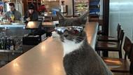 Güneş gözlüğü takan kedinin bir nedeni var