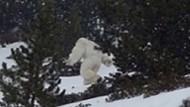 Kar adamı Yeti ilk kez görüntülendi!