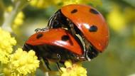 Canlılar seks ile üremekte neden ısrarlı?