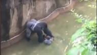 Hayvanat bahçesinde çocuk gorilin bulunduğu alana düştü