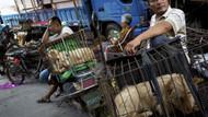 Çin'de köpek eti festivali tüm tepkilere rağmen başladı