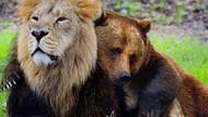 İstanbul'daki AVM bahçesinde aslan ve ayı bulundu!