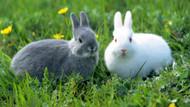 Sosyal medyayı çıldırtan tavşan sorusu!