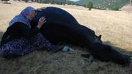 Sosyal medyayı sarsan kare: Ölen ineklerine sarılıp ağlayan yaşlı çift