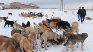 Kütahya'da sokak köpekleri açlıktan telef oluyor