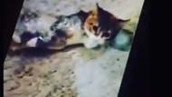Kediye bantlı işkence hayvanseverleri ayaklandırdı