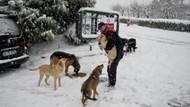 Maltepe'de mama verilen köpeklerin mutluluğu yüzleri gülümsetti