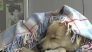 Sokak hayvanlarını üşümesin diye battaniyelere sardılar