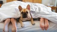 Köpeğinizle uyumanın hiç bilmediğiniz 7 faydası