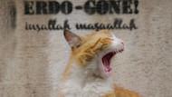 Kedi belgeseli, Time'ın En iyi 10 film listesinde